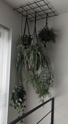 Room With Plants, House Plants Decor, Flowering House Plants, Indoor Garden, Indoor Plants, Small Balcony Garden, Diy Home Decor, Room Decor, Decoration Plante