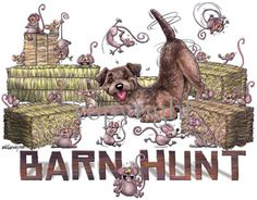 Border Terrier Barn Hunt
