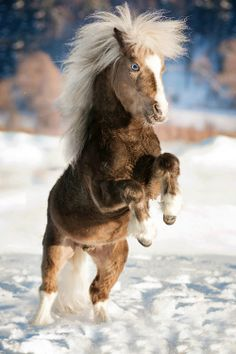 Horse by Olga Itina what a cutie!! awh.
