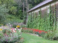 """""""The old school house that I call home isn't much to look at through most of the year but in August it turns into the flower house. Old School House, Behind The Scenes, Dan, Trail, Old Things, Outdoor Structures, Organic, Flowers, Plants"""