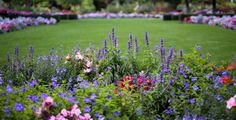 rabata kwiatowa fot. John R Perry Pixabay