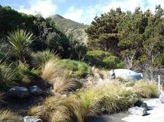 coastal garden nz - Google Search