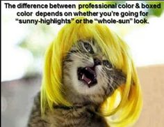 Hair humor