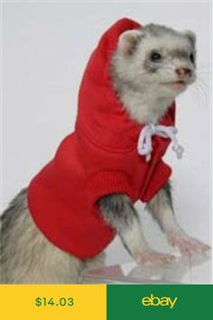 c2d772f452 Marshall Other Small Animal Supplies Pet Supplies  ebay Ferret Clothes