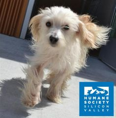 Princess Queenie and her mama, Star, are two fluffy gals looking to blend their family with yours!