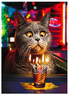 Make a Wish Funny Cat Birthday Greeting Card by Avanti Humorous Greetings Cards Happy Birthday Animated Cards, Cat Birthday Wishes, Birthday Wishes And Images, Birthday Greeting Cards, Friend Birthday, Birthday Greetings, Thing 1, Cat Gifts, Holidays And Events