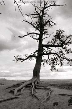 Image result for broken trees