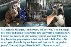 RESCUED 1/4!!!! Miami FL  Repost Plz CODE RED! SILVESTER (A1669243)  @sundaylark @bjanepaul  https://www.facebook.com/pages/Beau-Madison-Rescue-Network/171614246347603 …