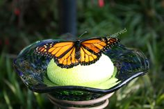 Butterfly Feeder  thebutterflylady.etsy.com