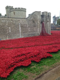 The Poppy Installation at the Tower of London. A moving display of ceramic poppies Commemorates those who lost their lives in WW1 #towerpoppies #london
