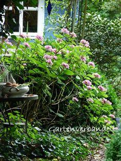 Gartenverbandelt: Sommergarten