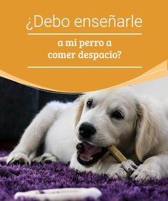¿Debo enseñarle a mi perro a comer despacio?  Los perros a veces desarrollan hábitos que son poco saludables, te hablamos de la importancia de enseñarle a tu perro a comer despacio. #adiestramiento #hábitos #perros #comidas