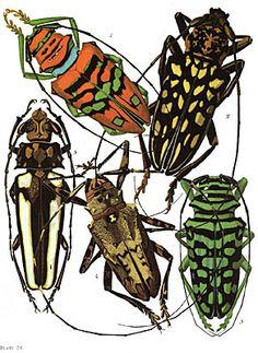 E. A. Seguy Insectes Plate 04, Cultural Entomology Digest 2