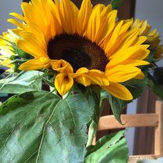 19.08. - mir selbst Blumen zu schenken macht mich glücklich #100happydays #happinesschallenge