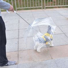 Transparent Pet Umbrella Small Dog Umbrella Rain Gear with Dog Leads Keeps Pet Dry Comfortable In Rain Snow Pet Dogs, Dogs And Puppies, Dog Cat, Pets, Dog Umbrella, Rain Gear, Cat Sweaters, Cat Accessories, Cat Supplies