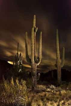 December 6, 2014 Moonlight casts an eerie glow on a saguaro in the Arizona desert. Photo By: John Aulick - See more at: http://www.arizonahighways.com/photography/photo-archive#sthash.Fv0mFHIy.dpuf