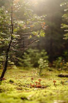 いかがでしたか?自然の美しさをさらに引き立ててくれる苔。場所によってその見え方はまた違ってきます。ぜひ実際に訪れてみて、そのミクロの世界の美しさに触れてみませんか?