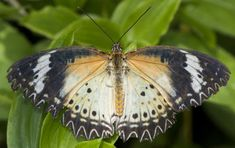 Superb Nature — Lovey Lady of Sabi Sands by Callie. All The Small Things, Beauty Photos, Animals Beautiful, Moth, Insects, Butterfly, Happy, Nature, Image