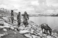 Kashmir, nomads making their way through Himalayas