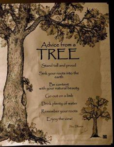ADVICE FROM A TREE: Stand tall and proud.Sink your roots into the earth.Be content with your natural beauty.Go out on a limb.Drink plenty of water.Remember your roots.Enjoy the view Positiv Quotes, Tree Quotes, Enjoy The Ride, Nature Quotes, Forest Quotes, Good Advice, Wise Words, Wise Sayings, Positive Sayings