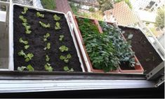 The ALGOT baskets are perfect for drainage in our window herb garden, any excess water can drain through the holes.