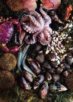 ! Fresh Seafood, Fish And Seafood, Peruvian Cuisine, The Fish Market, Seafood Market, Le Chef, Color Of Life, Ocean Life, Sea Creatures