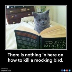 17 Hilarious Memes That Perfectly Combine Books and Cats
