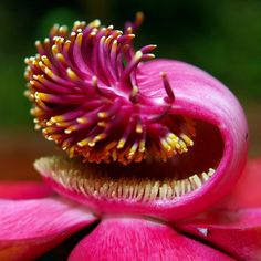 Flower of the Cannonball Tree, via Flickr.