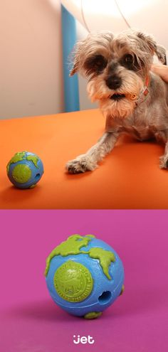 Give your dog the whole world!