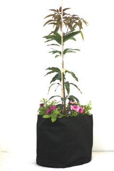 Solucion De Cultivo simple (50L)
