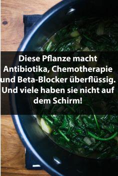 Diese Pflanze macht Antibiotika, Chemotherapie und Beta-Blocker überflüssig. Und viele haben sie nicht auf dem Schirm! Alternative Heilmethoden, Alternative Health, Medical Conditions, Superfoods, Food For Thought, Diy Beauty, Beauty Tips, Good To Know, Detox
