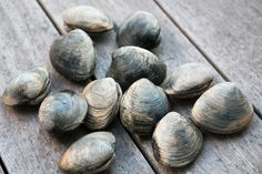 ... Stuffed Clam on Pinterest | Clams, Clams Casino and Steamed Clams