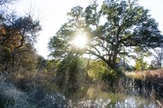 Twin Lakes Park, Cedar Park, Texas