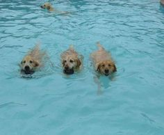 ...it would look like this. | These Dogs Paddling At A Doggy Daycare Pool Party Are Ridiculously Cute