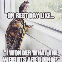 Don't miss me too much Gym, I'll be back in 1 day!