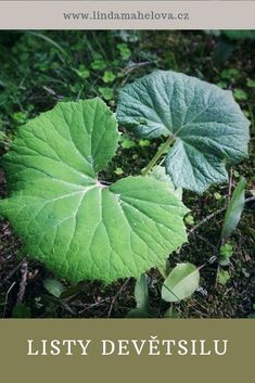 Plant Leaves, Plants, Honey, Syrup, Plant, Planting, Planets