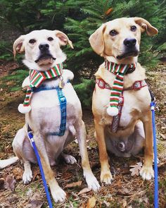 Pets Talk: Puppy Best Friends Adopted Together Are Still Inseparable   PostKitty