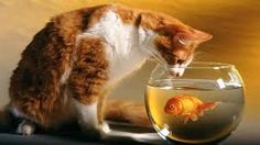 this cat are trying catch this fish.