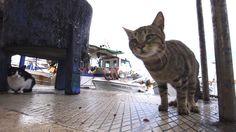 動物写真家・岩合光昭さんが旅したのは、ギリシャ・クレタ島。冬から春へと移ろう季節を、ネコの姿を通して描く。遺跡を縄張りにしたり、港で魚をねだったり。恋するネコも