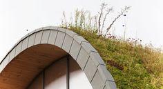 Close-up of Plants on Living Roof (wild flowers, grass, sedum, perennials)