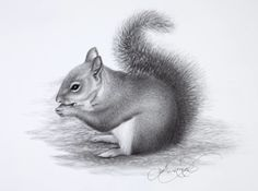 Want to learn how to draw this cute squirrel and other lifelike animals? Check out these helpful techniques on http://ArtistsNetwork.tv #ArtistsNetworkTV #DrawingAnimals