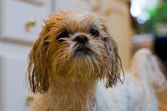 Com apenas três itens você dá um banho a seco em seu cachorrinho.