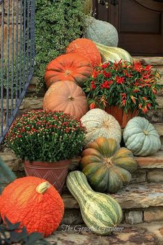 Fall landscaping: update your porch, patio or garden with gorgeous gourds and pumpkins! (love the oversized and misshapen gourds! Autumn Decorating, Porch Decorating, Decorating Ideas, Decorating Pumpkins, Fruits Decoration, Pumkin Decoration, House Decorations, Pumpkin Display, Pumpkin Vase