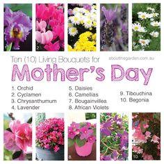 Ten (10) Autumn living flowers for Mum on Mother's Day #autumn #flowers #mothersday #mum #gift #aboutthegarden #magazine