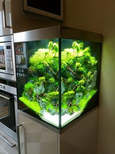 Home Aquarium Ideas: The Aquarium Buyers Guide 10384097_753942021385762_7813336409359454430_n.jpg 720×960 пикс