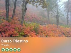 https://www.tripadvisor.com/Attraction_Review-g187813-d3704547-Reviews-Carso_Triestino-Trieste_Province_of_Trieste_Friuli_Venezia_Giulia.html?m=19904