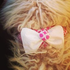 diy dog collar cover