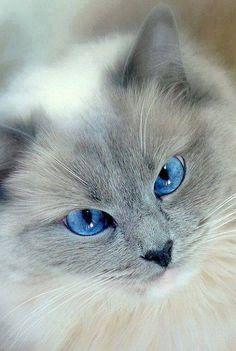 Occhioni azzurri