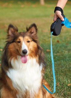 Taking the retractable leash to a whole new level, the Kosoku Retractable Dog Leash by Quirky combines a cushioned over-the-wrist design with innovative dog-friendly features that transform everyday walks into a special treat for both you and your pet.