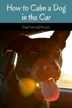 Learn How To Calm A Learn How To Calm A Dog In The Car We Will